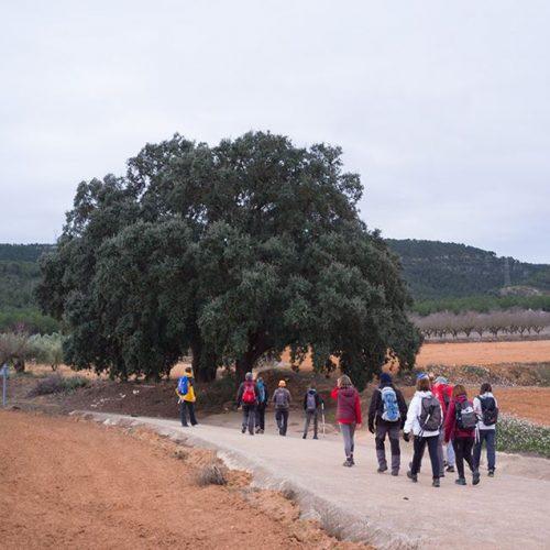 Federats i no federats prodran participar demà a la marxa intercomarcal preparada pel Centre Excursionista d'Ontinyent