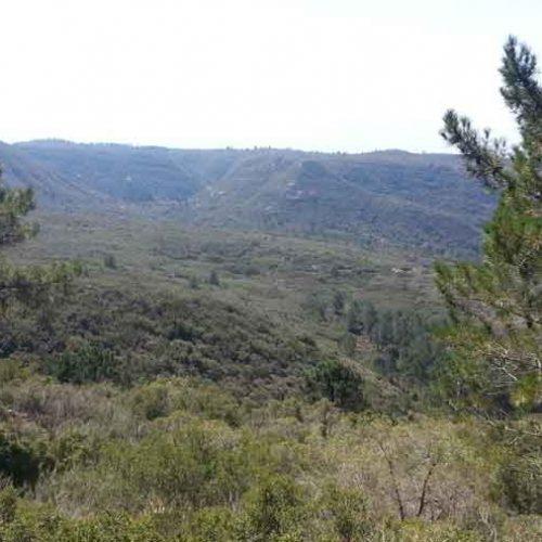 Turisme botànic per conéixer les plantes de la comarca