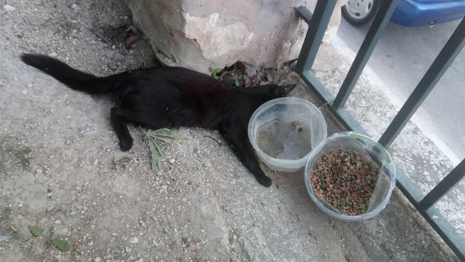 Troben 5 gats i un pardal morts per enverinament en Sant Rafel El Periòdic d'Ontinyent - Noticies a Ontinyent