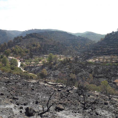 Llutxent demanarà ser declarada zona catastròfica