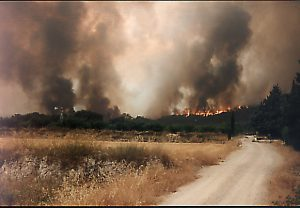 25 anys de la major tragèdia forestal d'Ontinyent: l'incendi del 94 El Periòdic d'Ontinyent