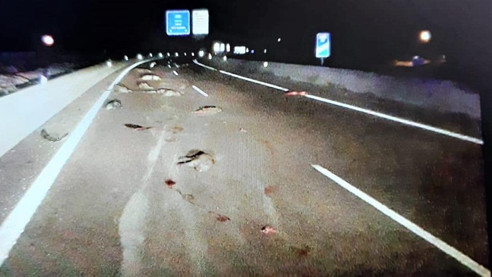 Atropellament massiu de porcs senglars a l'A-7 El Periòdic d'Ontinyent