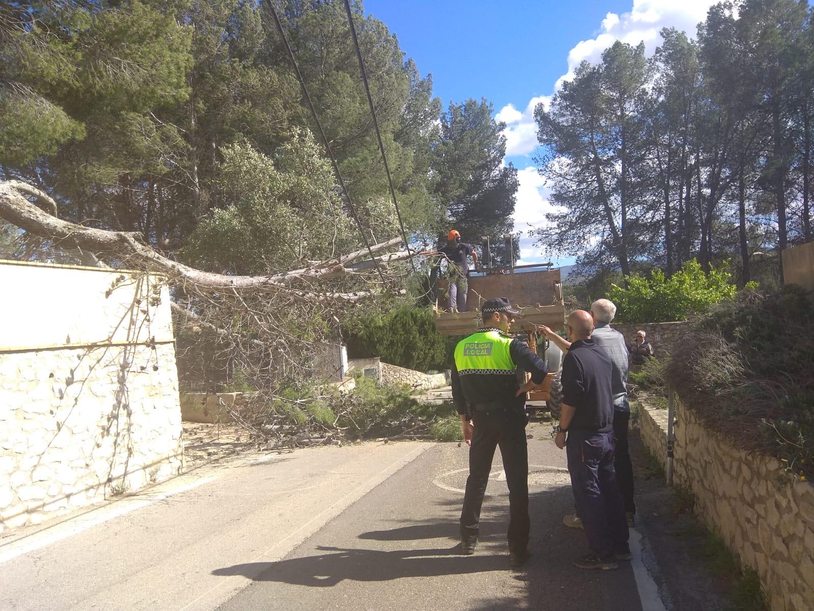 El fort vent fa caure un arbre a Santa Ana El Periòdic d'Ontinyent