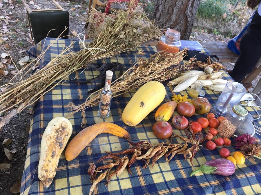 La Colla Ecologista l'Arrel convida a mantindre el patrimoni de la llavor local El Periòdic d'Ontinyent