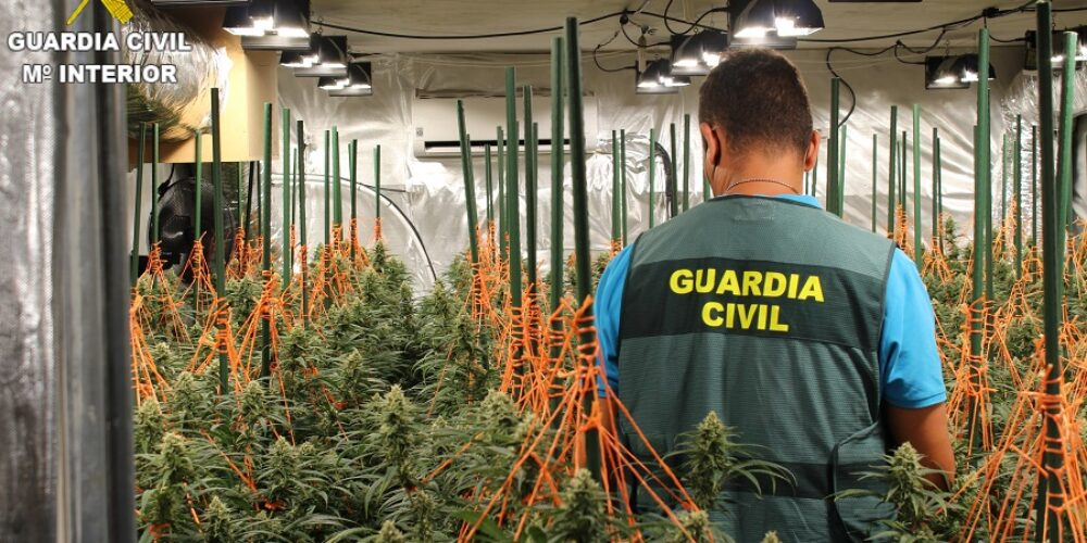 La Guàrdia Civil deté a un home a Agullent i confisca 230 plantes de marihuana